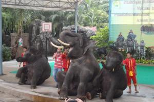 Шоу слонов в зоопарке Дусит