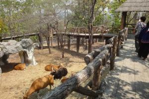 Зоопарк Чианг Май