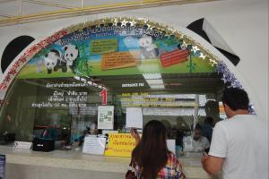 Панды в зоопарке Чианг Май