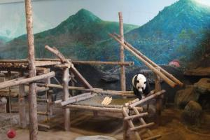 Папа Чуанг Чуанг в зоопарке Чианг Май