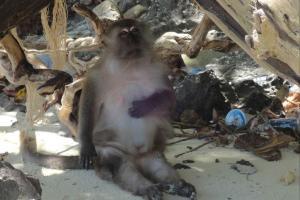 Обезьяна на пляже Monkey Beach на Пхи Пхи