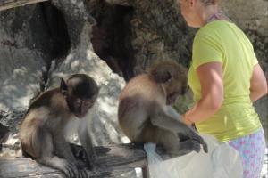 Обезьяны на пляже Monkey Beach на Пхи Пхи