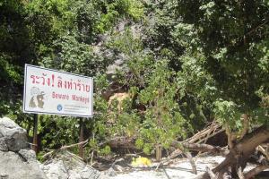 Табличка «Осторожно обезьяны» на пляже Monkey Beach на Пхи Пхи