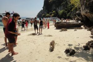 Пляж Monkey Beach на Пи Пи