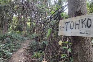 Дорога в джунглях на Пхи-Пхи