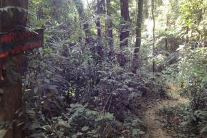 Дорога в джунглях на острове Пхи-Пхи