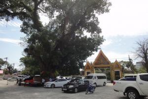 Дерево на территории храма - Wat Wichit Songkram