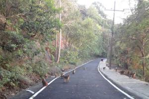 Обезьяны на Monkey Hill