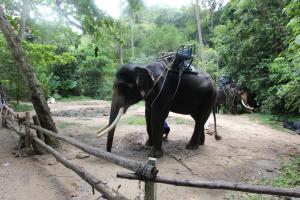 Слон поможет довезти до 2 уровня водопада Namuag