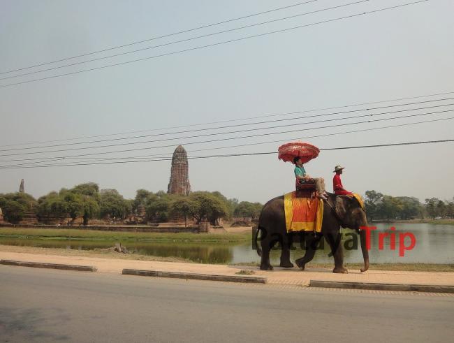 Катание на слонах по Аюттайе