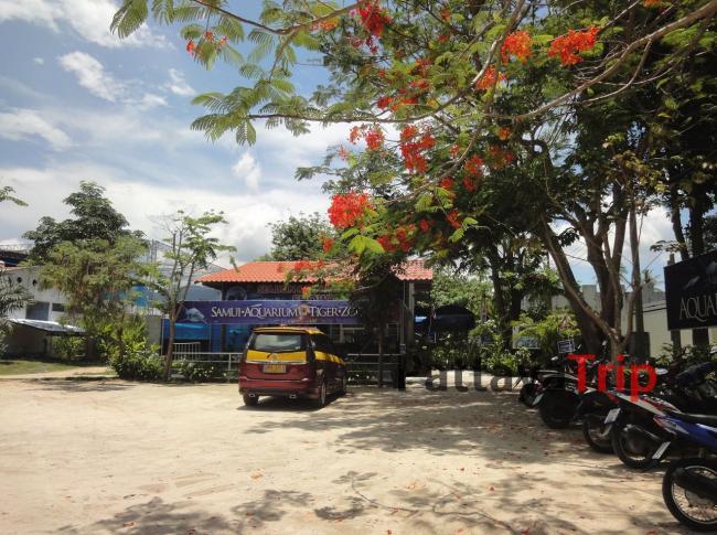 Зоопарк на Самуи