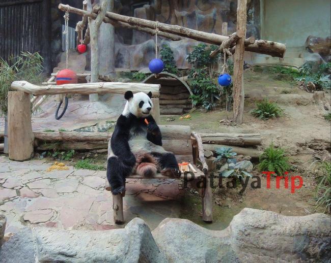 Зоопарк Чианг Мая