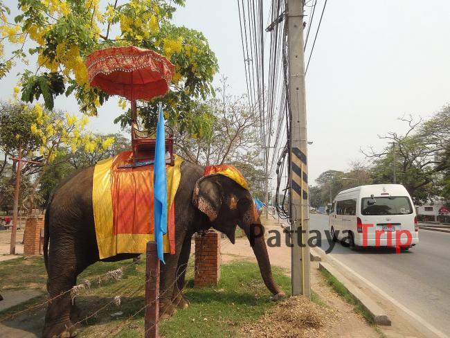 Слоны - экзотический транспорт в Аюттайе