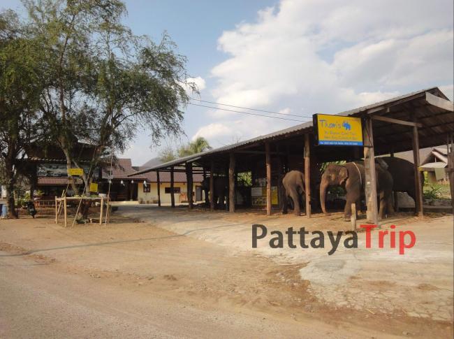 Деревня слонов в Пае