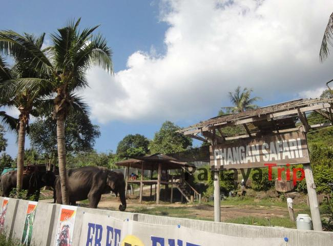 Phangan safari
