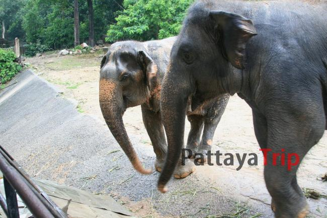 Слон со слоненком