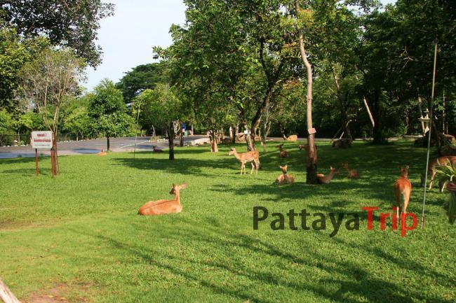 Парк Антилоп