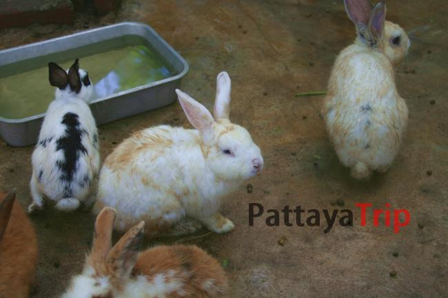 Кролики на обеде
