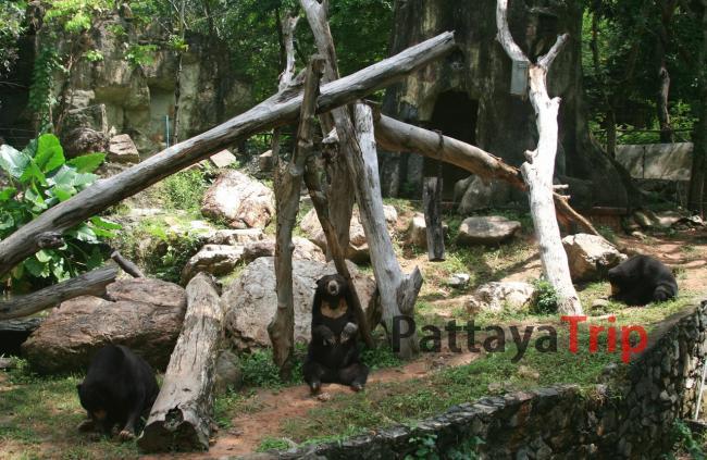 Медведи в вольере