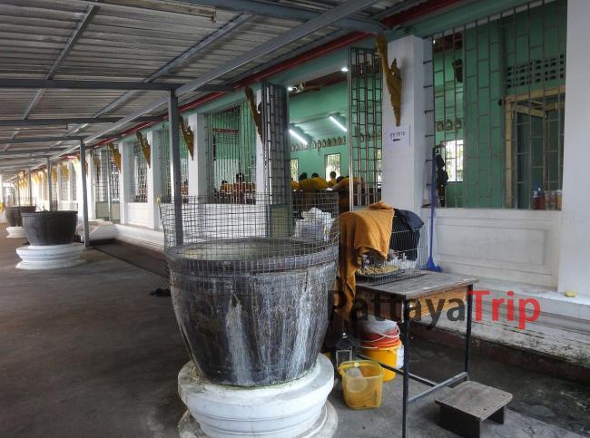 Школа Wat Chana Songkhram