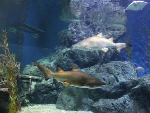 Siam Ocean World - океанариум в Бангкоке