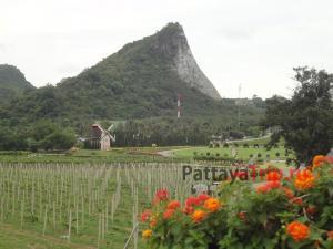 Виноградник Silver Lake в Паттайе
