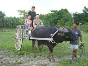 Катание на буйволах