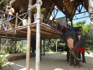 Катание на слонах в сафари-парке Намуанг