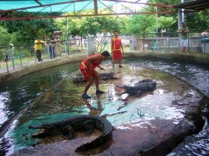 Шоу на Крокодиловой ферме