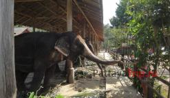 Слоны на Ко Чанге