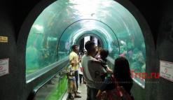 Стеклянный туннель в Аквариуме Пхукета